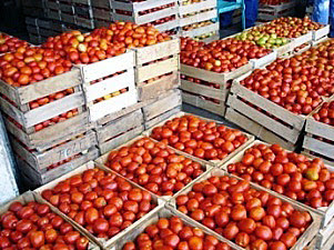 agropecuario.tomates