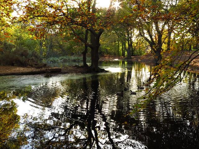 Iron Pan Pond