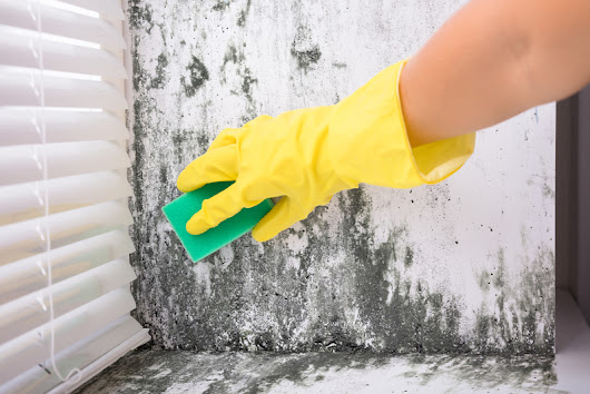 How to Prevent Mold Growth in Your Home | Rentometer
