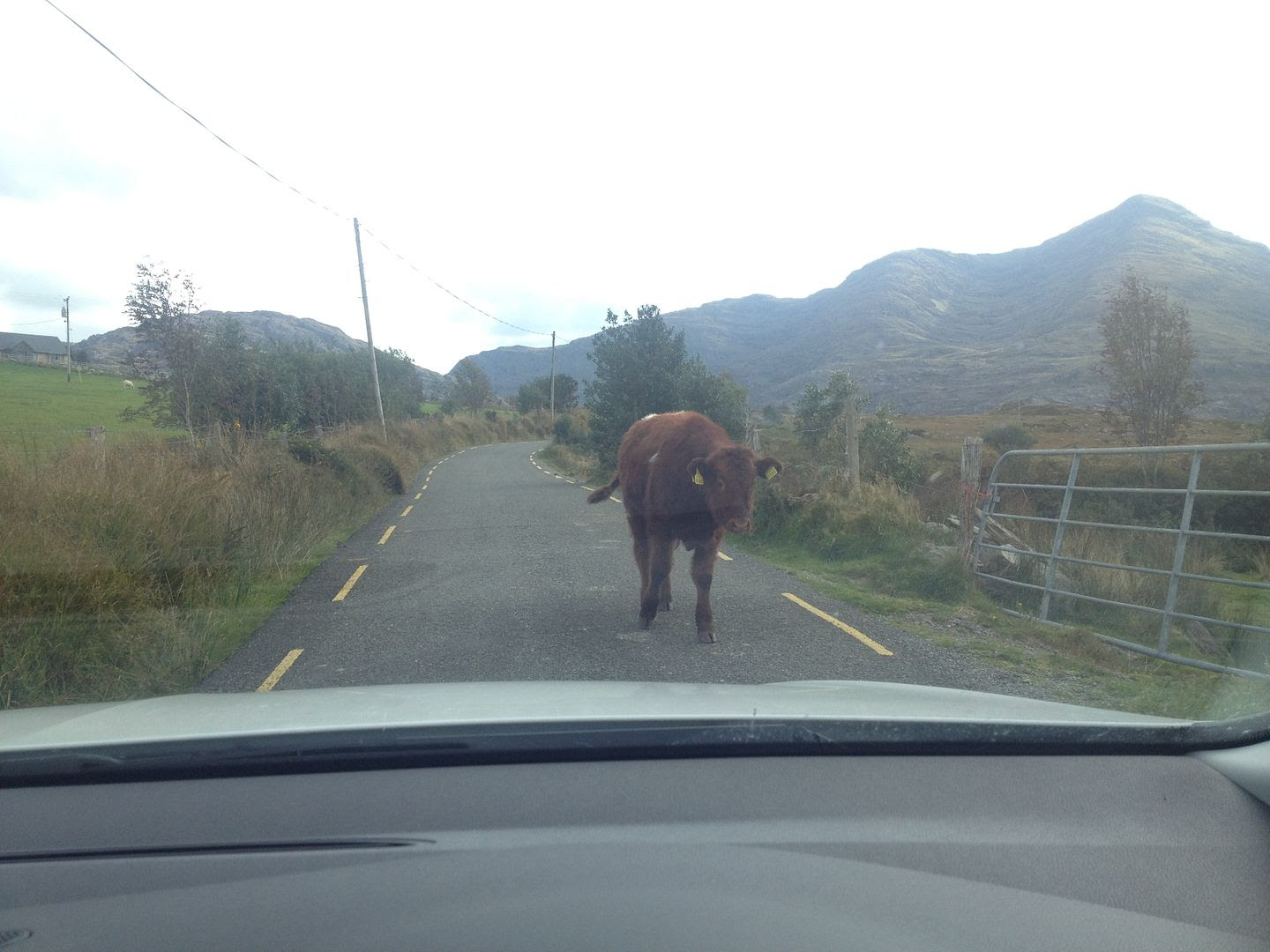 County Kerry, Ireland photo 2015-10-14 14.26.20_zpsobvqehlx.jpg