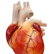 Studies Show Little to No Effect on Cardiovascular Health from Testosterone Replacement Therapy