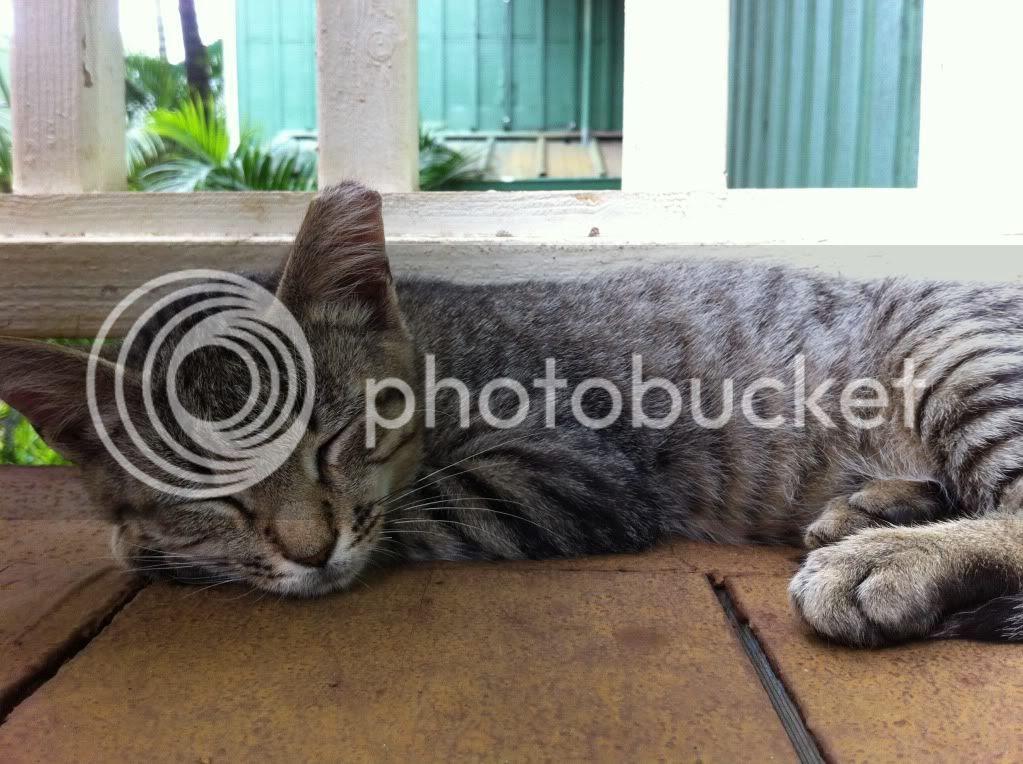 Stray cat on Kauai
