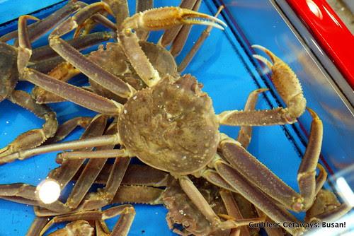 crab-korea.jpg