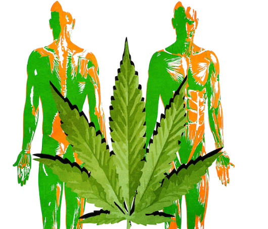 Hopegrown :: Understanding Your Body & Its Relationship With Cannabis