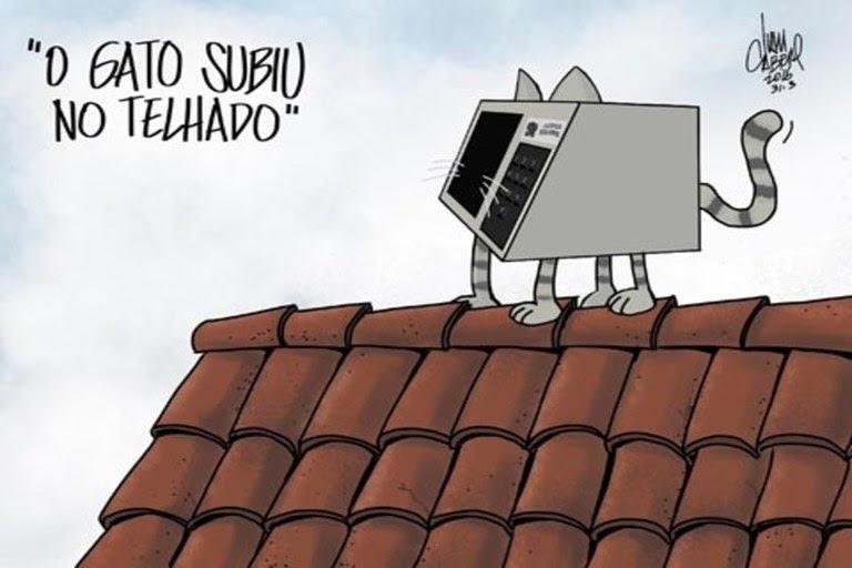 gato telhado_phixr.jpg