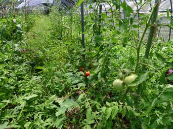 ジャングル農園