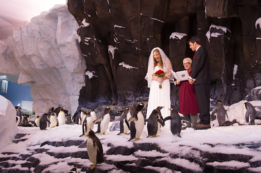 Today, a couple got married inside the penguin exhibit that I work at - Imgur