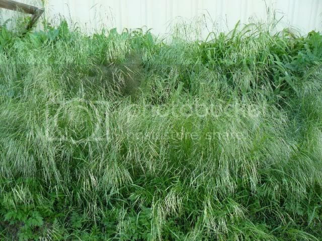 Garage Wall Weeds photo garagewallweeds_zps89ca9860.jpg