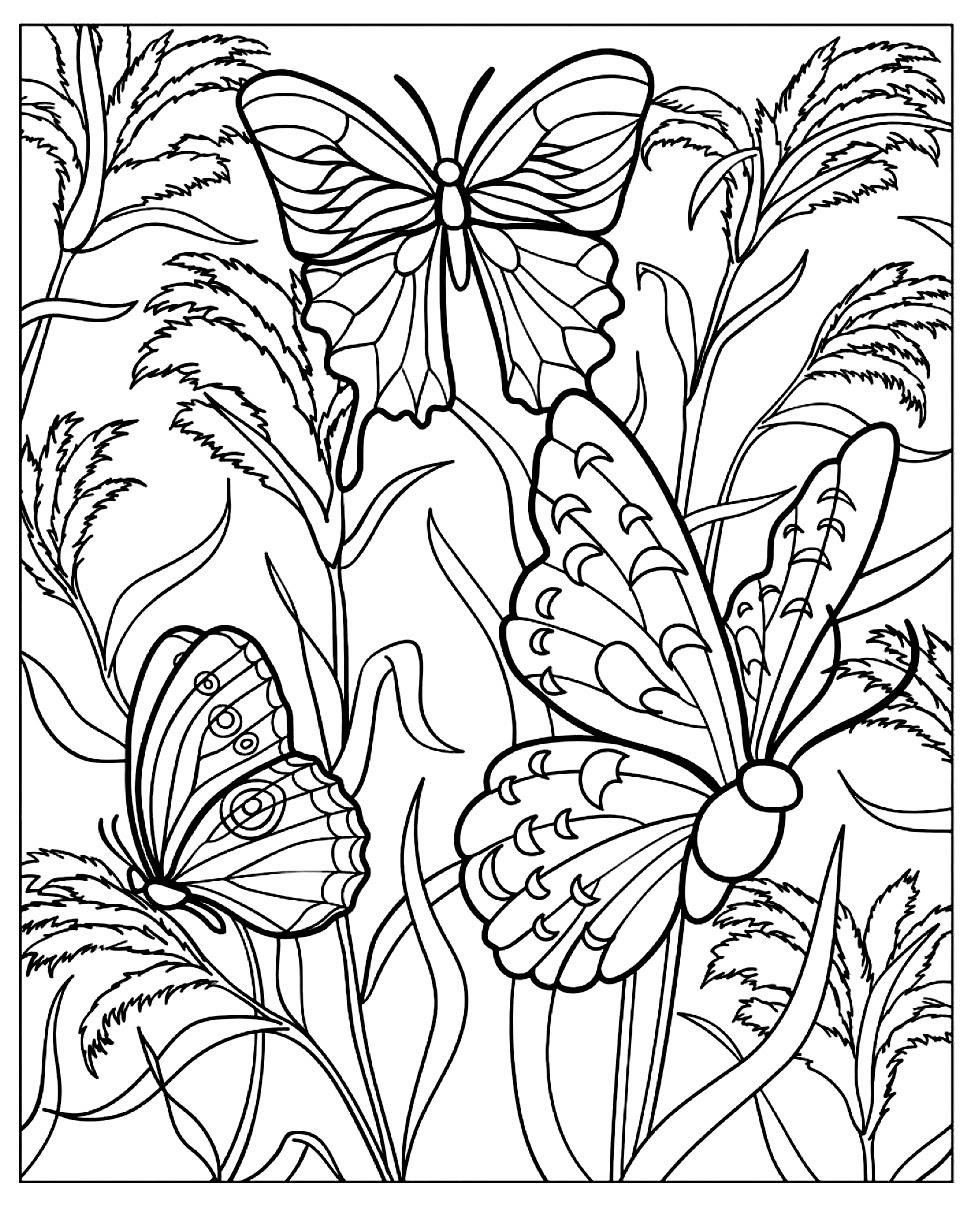 Butterflies in a green nature - Butterflies & insects ...