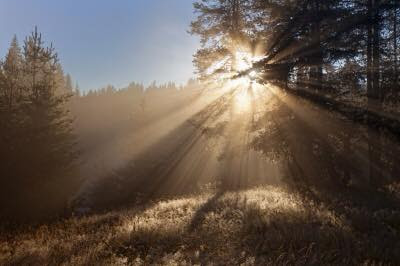 [Photo of bright sunlight shining in the forest]