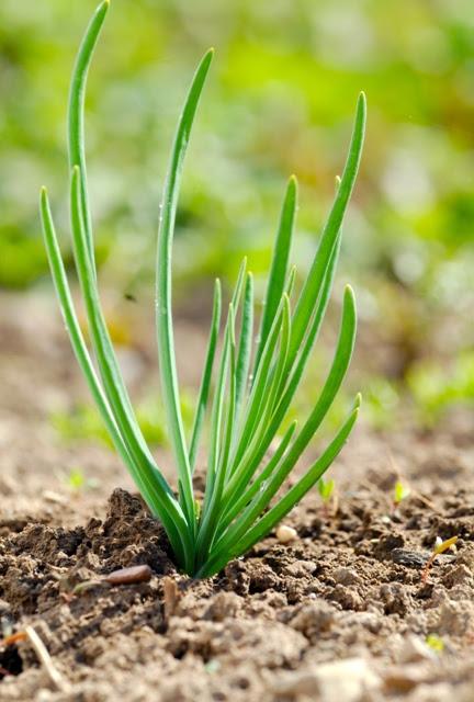 Misturas de adubos orgânicos obtêm-se um melhor balanço de nutrientes - Fotos Shutterstock