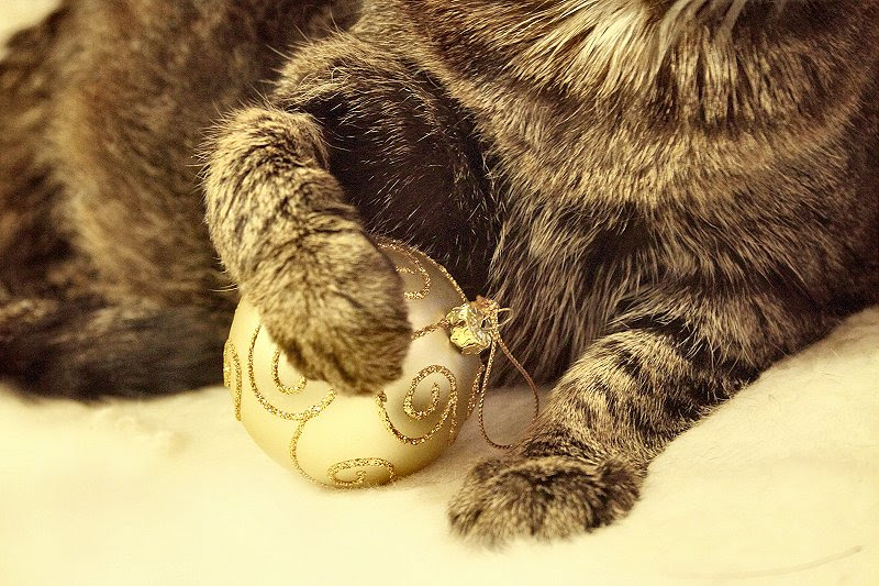 Paw and bauble