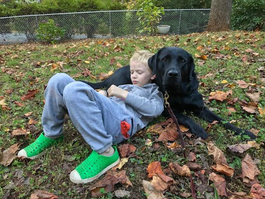 Animal Therapy for Kids with Autism