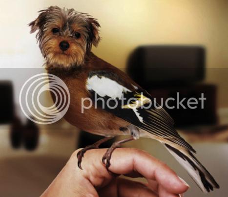 photo 10DirdsAKADogbirds_zps91e419a5.png