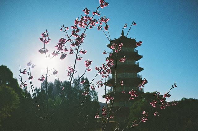 Scent of Nam Tien Temple