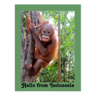 Cute Hello from Indonesia Postcard