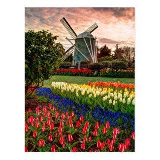 Tulip Festival Post Card