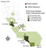 Thumbnail of Invasive Aedes mosquitoes detected during 2011–2015 and number of imported human cases of dengue, chikungunya fever, or both reported during 2014 in counties in California, USA.