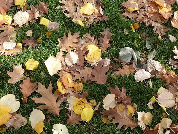 herbe et feuilles