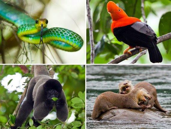 Ministerio de Agricultura prohíbe uso de animales nativos y exóticos en circos en Perú