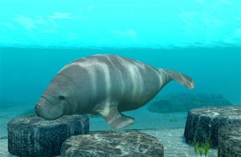 10 Largest Animals In The World Still Exist Today