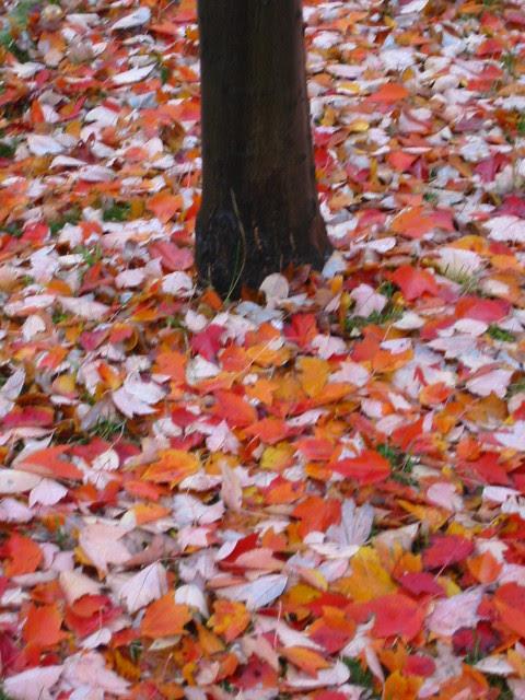 Autumn in reds
