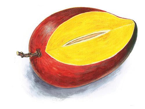 愛文芒果的剖面圖