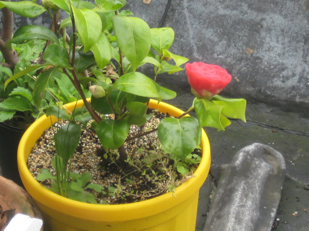 first balcony flower