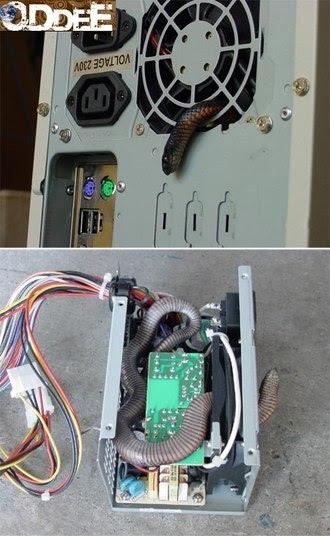Tem gente que não cuida mesmo da CPU do computador. Saca só, essa aqui virou um ninho de cobra!