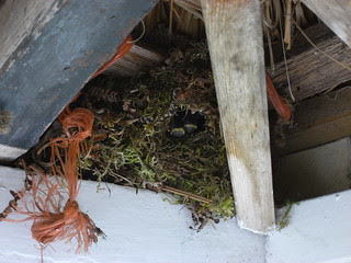 Wren's nest in porch