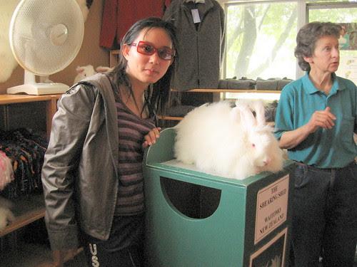 Waitomo_ Hare Shearing