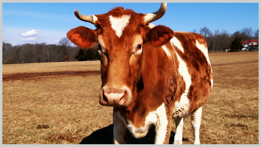 Tennessee's Ag Gag (Modeled After North Carolina Law) Didn't Last Long » Food Integrity Campaign