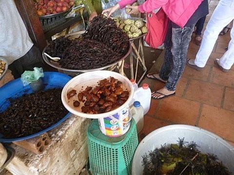 Nhiều loài côn trùng độc khác nhau được bày bán ở chợ cửa khẩu Tịnh Biên