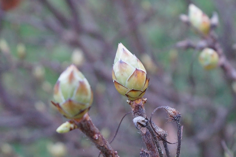 Blüte-1
