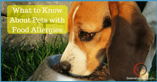 Pet Food Allergies - Symptoms and Solutions