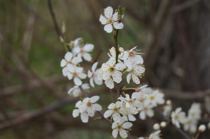 Blüte-3
