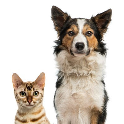 Compare ASPCA Pet Insurance vs. PetFirst