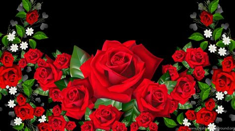 rose wallpapers  rose flower images rose pictures