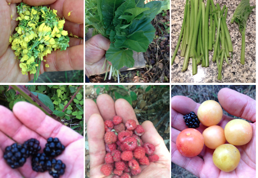 Foragers' Delight: Can Wild Foods Make City Dwellers Healthier? | Civil Eats
