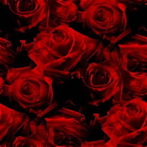red roses pattern background image wallpaper  texture