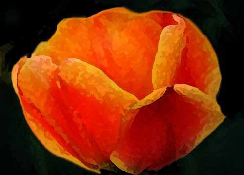 Blumenbilder Nach Vorlagen Malen