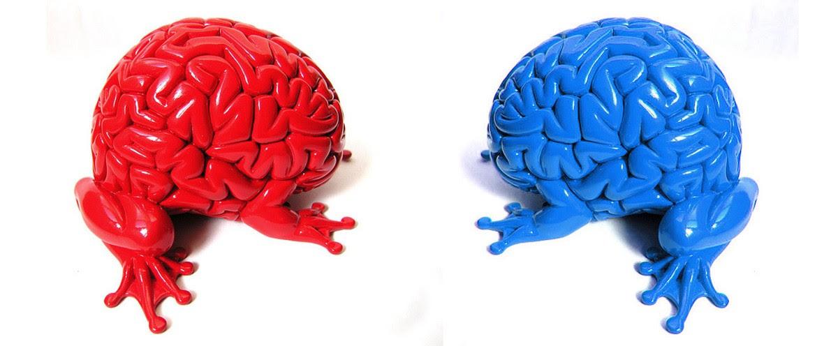 Experimentos na área de neurociência indicam que existem cérebros de pessoas com visões políticas contrárias são diferentes (Foto: Flickr)