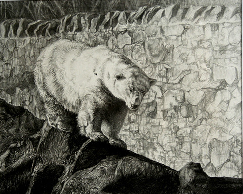Polar Bear Drawing - Edinburgh Zoo