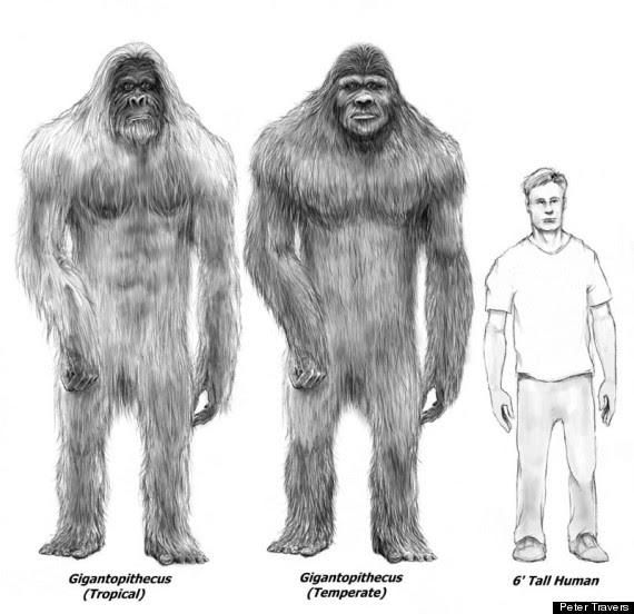 Bigfoot Gigantopithecus