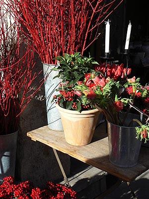 fleurs et lumières.jpg