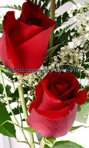 long stem red roses and white baby breath flowers