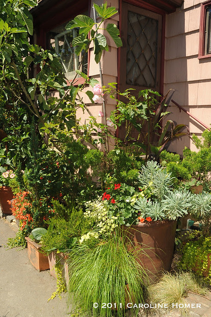 Potted plants near an entrance to the home
