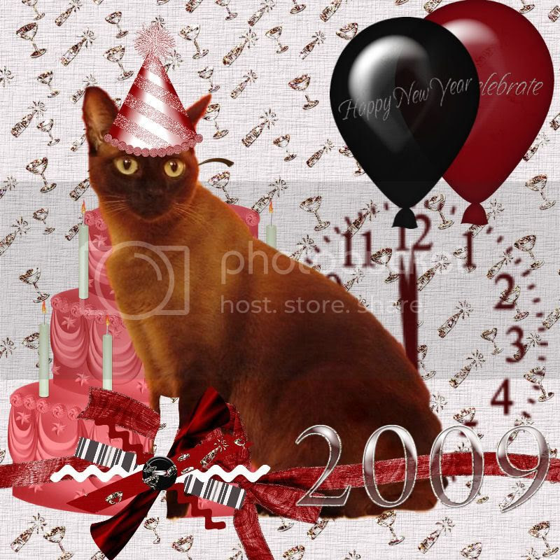 Burmese Cat,Happy New Year