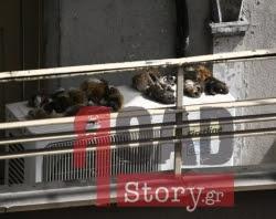 Δέρματα ζώων απλωμένα σε μπαλκόνι μεταναστών στο κέντρο της Αθήνας