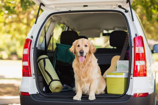 How to enjoy a road trip with your dog